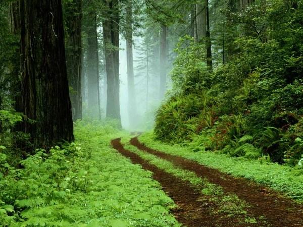 fond-ecran-chemin-forestier