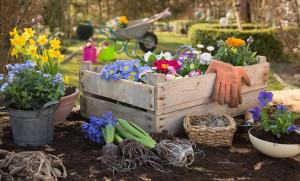 Frhlingsblumen: Blumen einpflanzen im Frhjahr