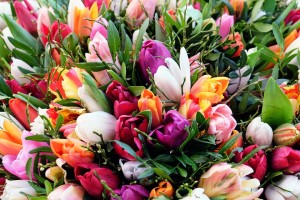 Tulipes immergées