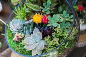 Terrarium avec cactus et succulentes