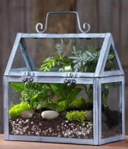 Terrarium Plante Décoration Printemps